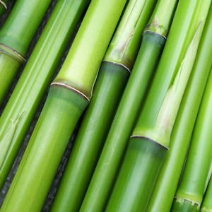 The photo of bamboo